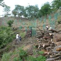 谷に落としていた丸太や雑木の枝などを引上げた成果です。 中国新聞販売所の皆さんご苦労様でした。 今回はここまでの作業で終了しました。 今後引き続き伐採と整理を行ない、桜の植樹を続ける予定です。