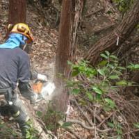 尾長天満宮境内の整備で、上の駐車場から新しい参道を作るための支障木の伐採作業