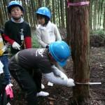 4つのグループに分かれて檜林の中に入り、『なぜ間伐をするか』 『木の切り方は』などの説明のあと、手分けしてのこで檜を切り倒しま した。手作業ではなかなか切れませんが、倒れたときには 大きな歓声があがりました。みんなで協力して作業した実感が得られた と思います。倒した木は午後からのクラフトに使うため玉切りして持帰り ます。