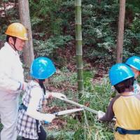まずは手のこで竹を伐採