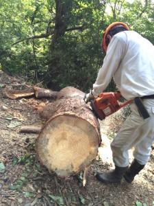 倒木木の大きさ