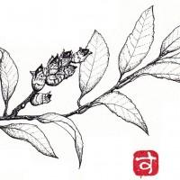 blanch-11