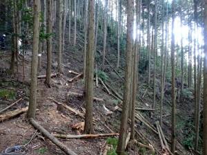 間伐後風景