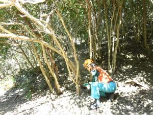 薮化する椿群生地整備①