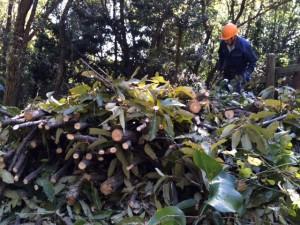 整然とされた雑木