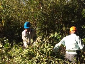 雑木林整備