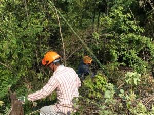 雑木の整備2