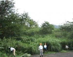 下刈り作業風景