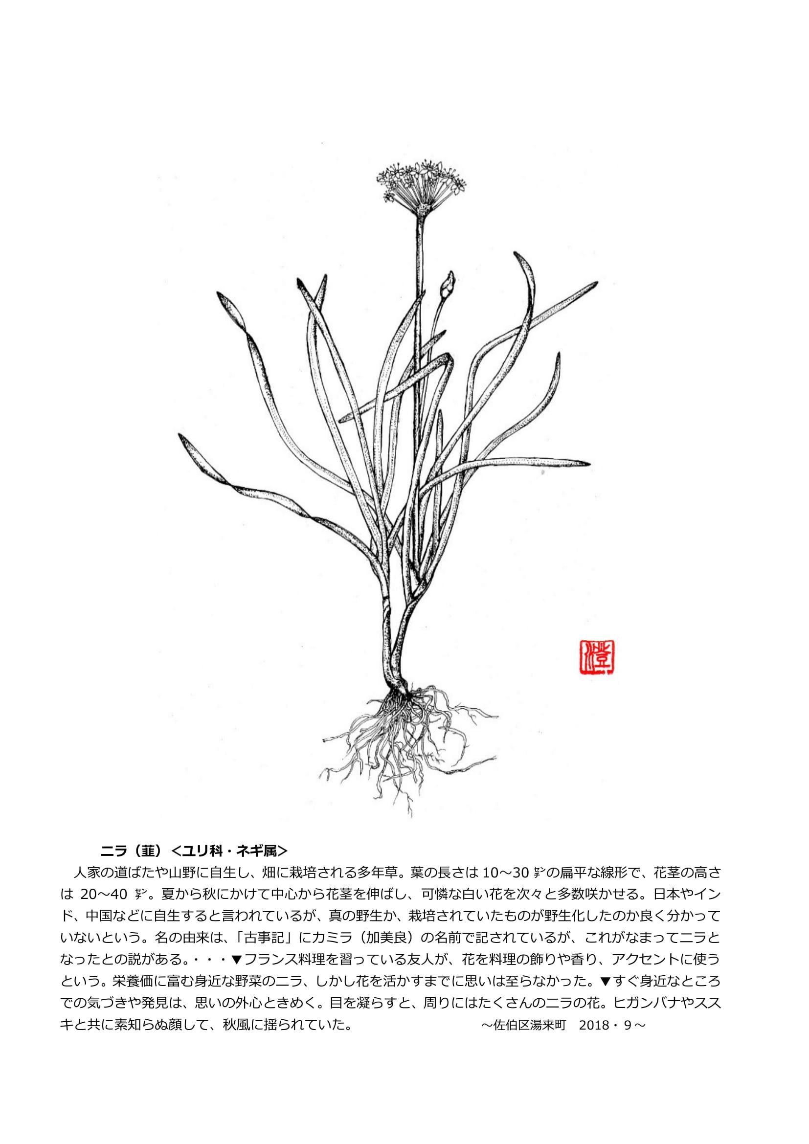今月の一枝