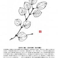 今月のひと枝